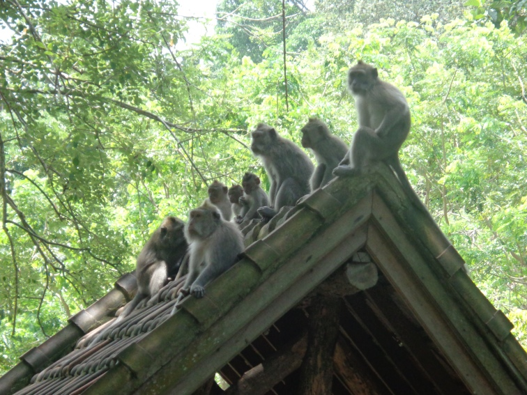 Monkey in a row